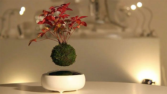 Air Bonsai Erfindung