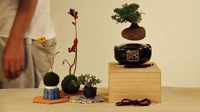 Air Bonsai Kickstarter-Kampagne
